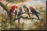 Macaw Morning