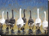 Waddling In The Rain