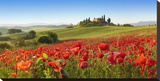 Orcia valley in spring  Tuscany (detail)