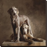Longhaired Weimaraners (detail)