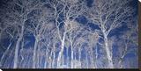 Birch Trees (detail)