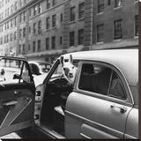 Llama in a car  ca 1950