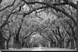 Avenue of the Oaks II