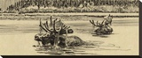 Moose in River (sepia)