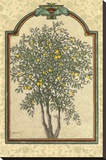 Classical Lemon