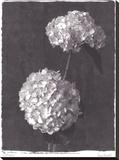Hydrangea Bouquets