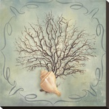 Seashells IV