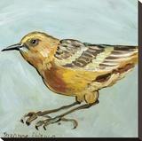 Bird XI
