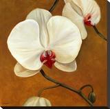 Orquideas Blancas II