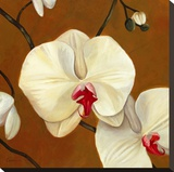 Orquideas Blancas I