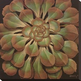 Succulent II