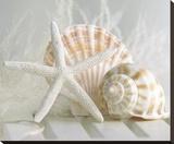 Cali Starfish I