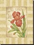 Belle Fleur II