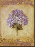 Hydrangea Violeta