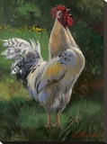 White And Yellow Rooster