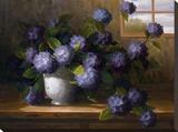 Hydrangea Blossoms II