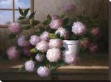 Hydrangea Blossoms l