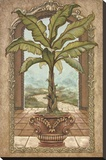 Classical Banana Tree