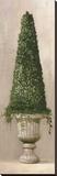 Florentine Topiary II