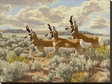 Pronghorn Run