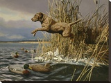 Brown Lab Retrieving