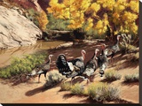 Merriam Turkeys in Cottonwood Canyon