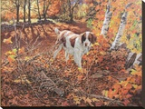 Freeze Before Flight - Brittany Spaniel