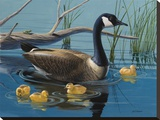 Canadian Goose
