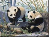 Pandas