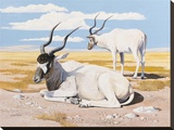 Addax