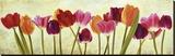 Tulip parade