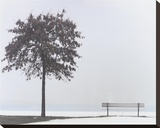 Bench: Oyster Bay  NY