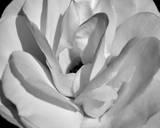 Macro Flower I