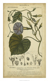 Floral Botanica I