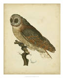 Antique Nozeman Owl IV
