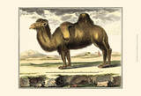 Diderot Camel