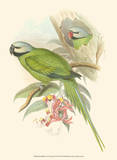 Small Birds of Tropics II