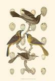 British Birds and Eggs II