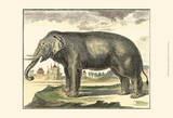 Diderot Elephant