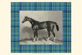Equestrian Plaid IV