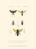 Antique Bees I