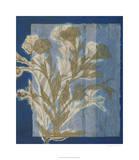 Santorini Floral II