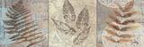 Leaves & Rosettes II