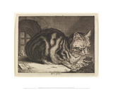 The Large Cat  1657