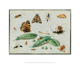 Peapods and Insects  ca 1650