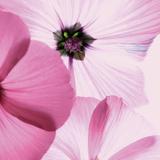 Lavender Mist II