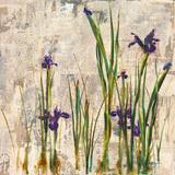 Iris Mist