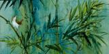 Bambu IV