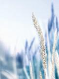 Blue Grass II