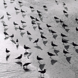 Escher&#39;s Seagulls